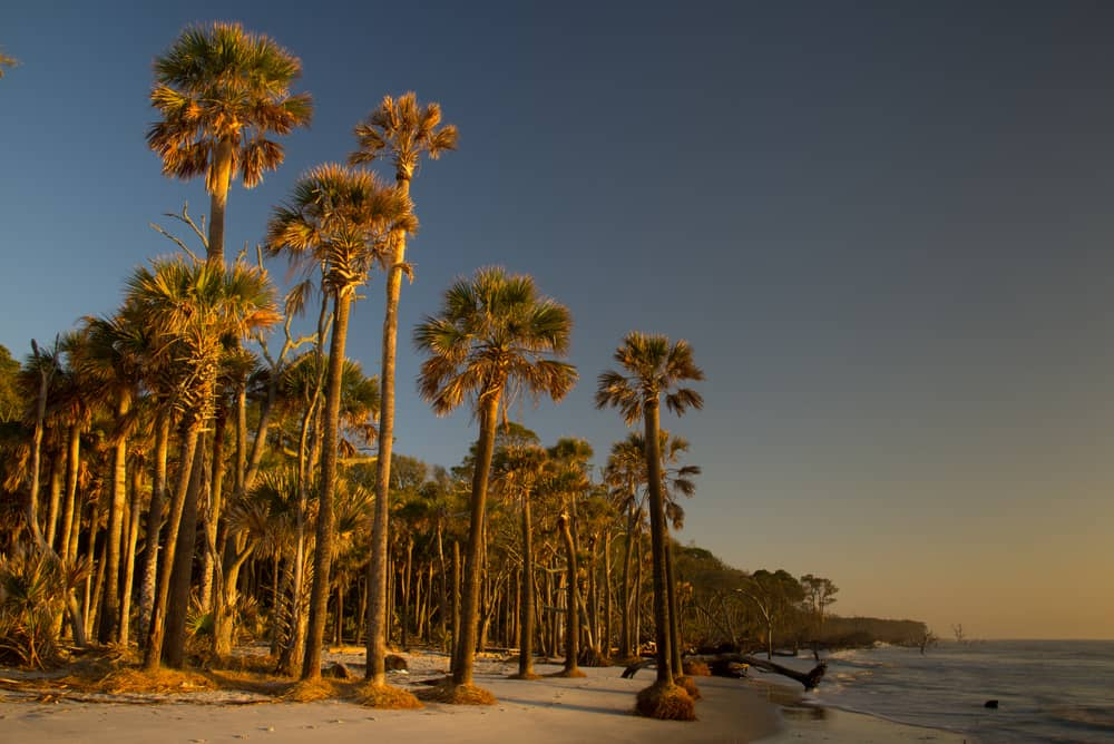 Image Result For Hunting Island State Park Beaufort County South Carolina United States